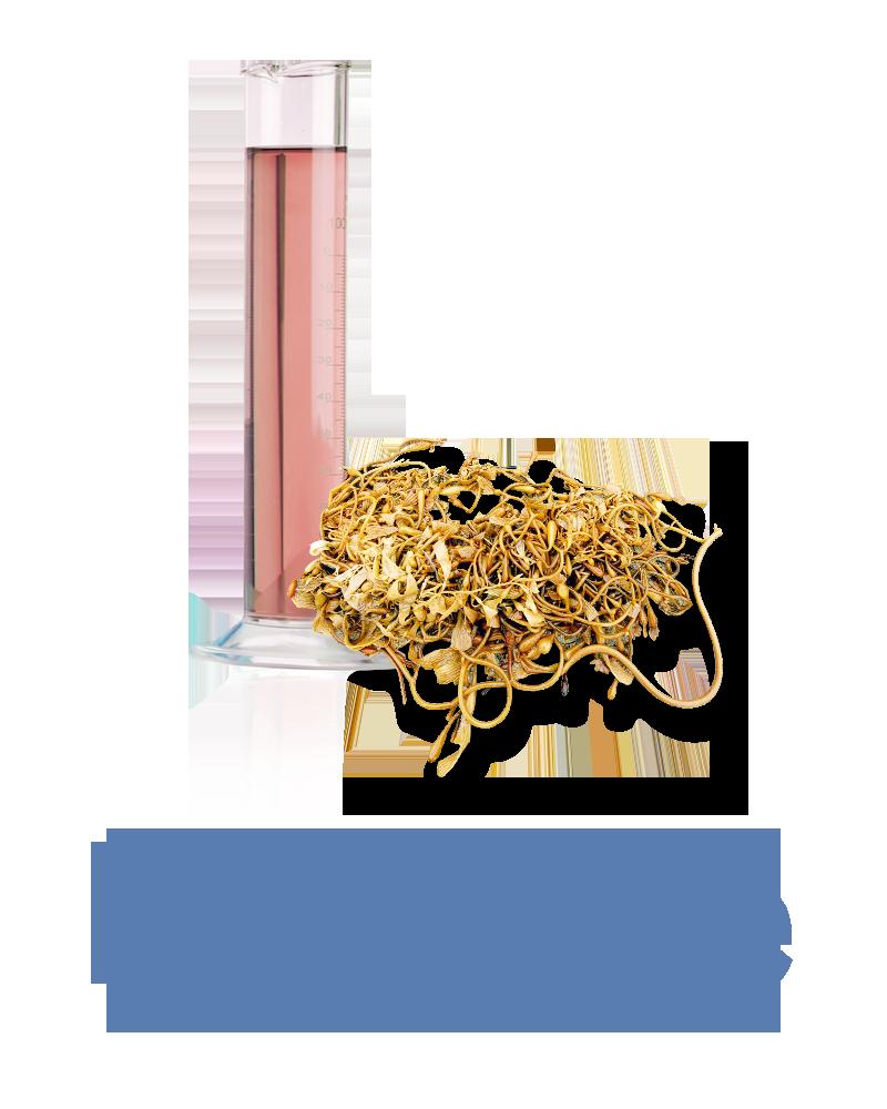 brown algae Anti-aging Ingredient
