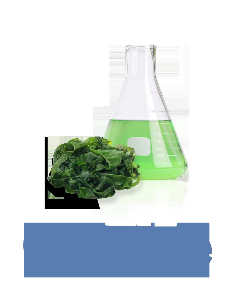 Green algae Anti-aging Ingredient