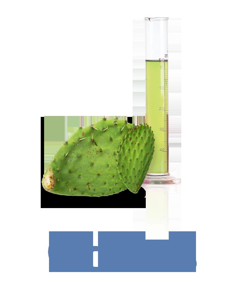 cactus Anti-aging facial Ingredient
