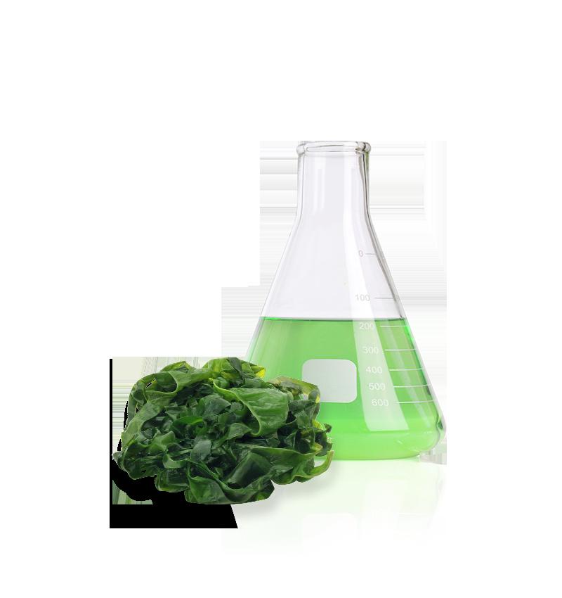 green algae Anti Aging Ingredient