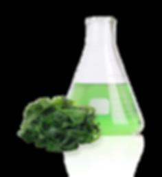 Algae Anti-aging ingredient
