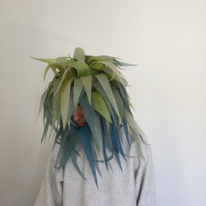 Becoming Plant