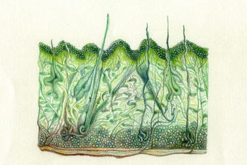 1strata colored pencils on paper 2020.jp