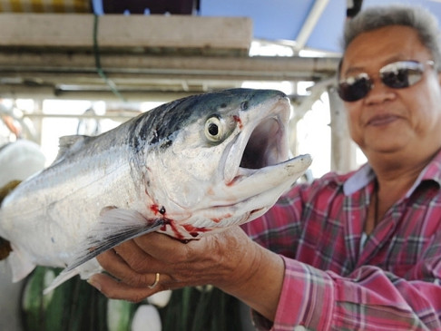 B.C. First Nations get clarity on fishing rights from top court