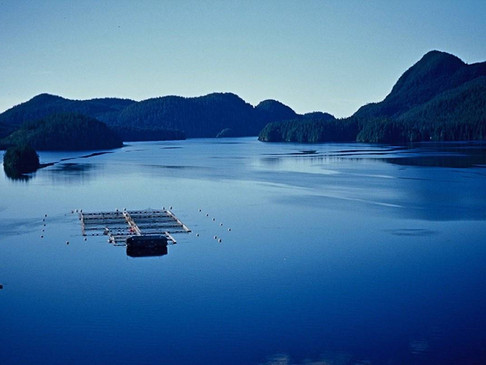 B.C. government releases advisory council report on finfish aquaculture