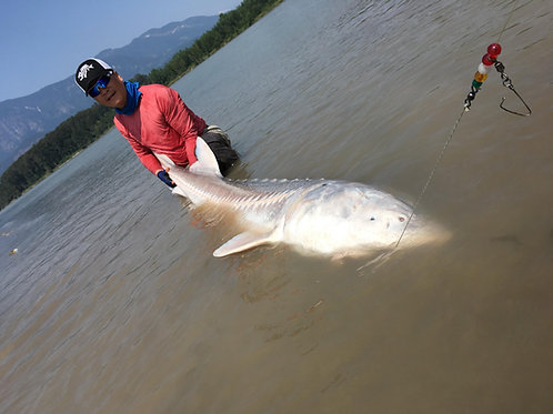 Guided Fraser River Sturgeon Trips
