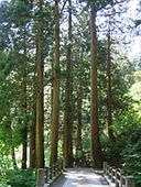 慈光寺杉並木