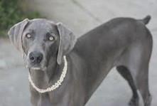 Der Hund - The Top 5 German Dog Breeds
