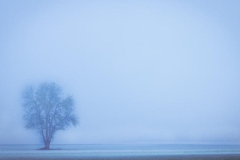 Lone Cold Tree