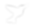 logo blanc png fond transparent.png