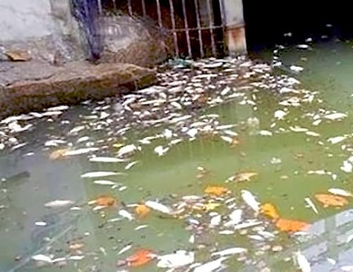 Poluição nas Lagoas da RO (foto da lagoa e de Casota)
