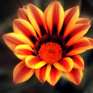 Orange Yellow Flower.jpg