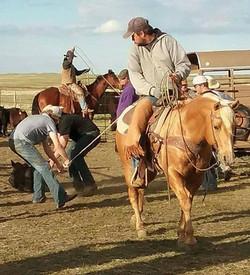 tennessee dragging calves.jpg