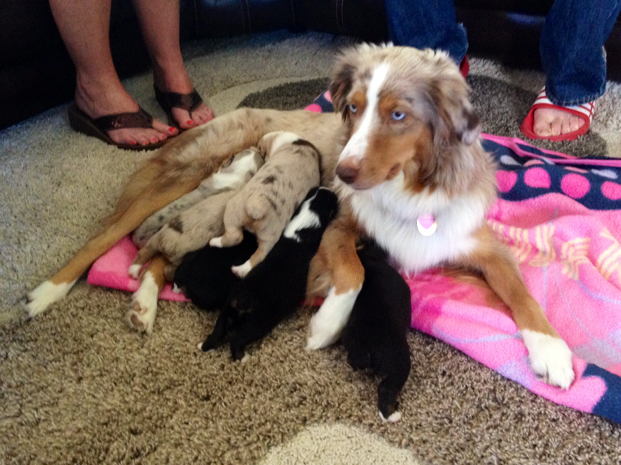 Kadie and the puppies