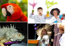 Animal and Science Shows