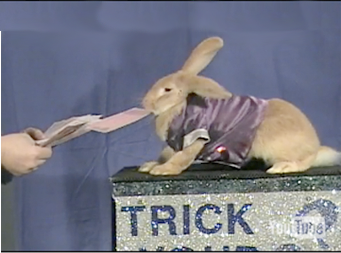 magic show with rabbitt atlanta ga