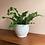 Thumbnail: Stor Blomsterpotte