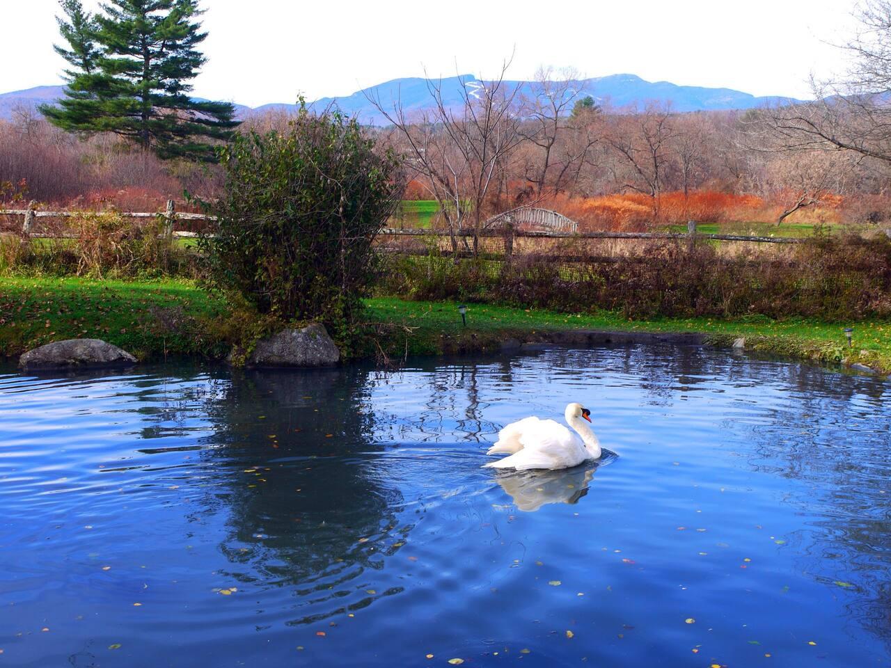 Birdsong Ponds