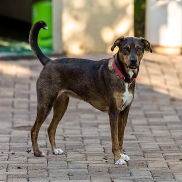 Pets - Bailey
