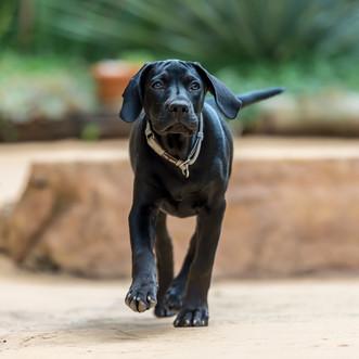 Pets - Emmy