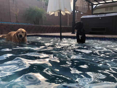 Hamilton dogs.jpg