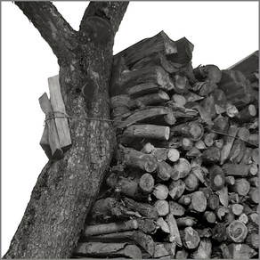 Holz vor der Hütt'n - II   ⸧ | ⸦   Woodpile - II