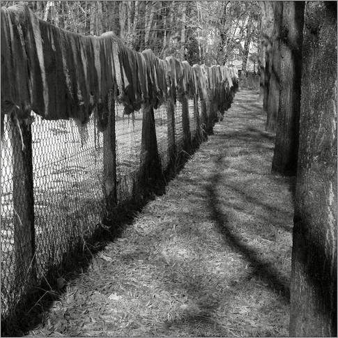 Lapprige Angelegenheit ⸧ | ⸦ Limp Affair