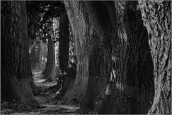 Pfad der Erleuchtung - II  ⸧ | ⸦  Path of Enlightenment II