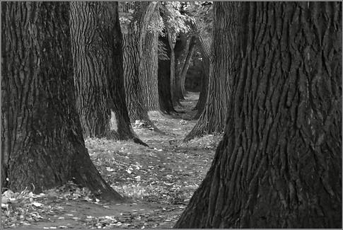 Pfad der Erleuchtung - III  ⸧ | ⸦  Path of Enlightenment III