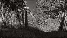 Eingang zum Paradies ⸧ | ⸦ Heaven's Gate