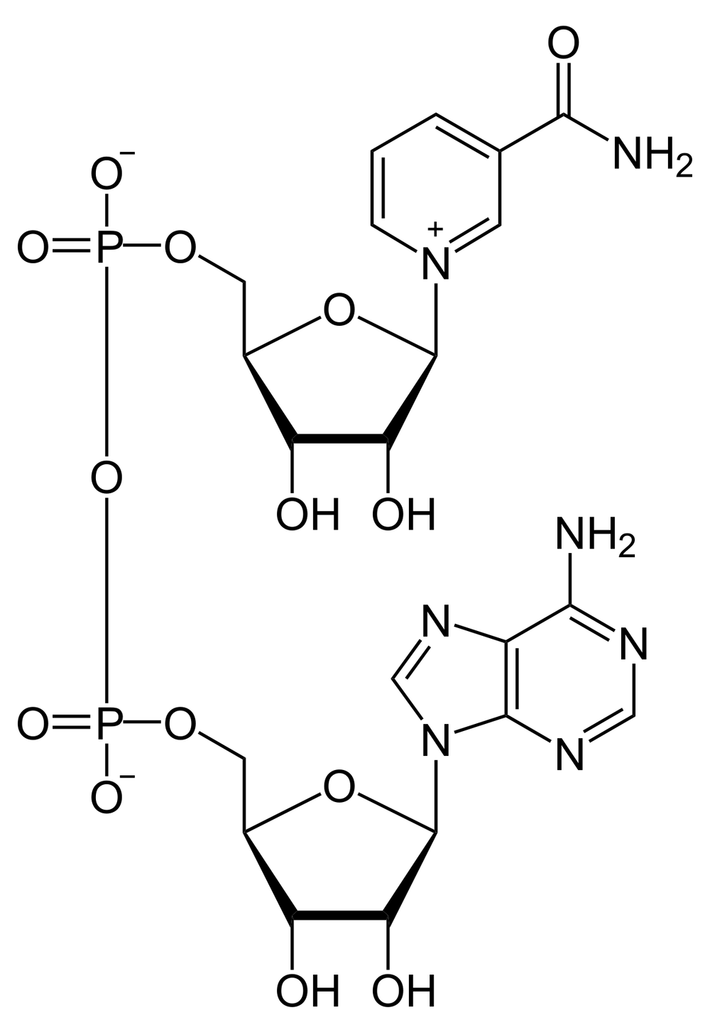 NAD structure