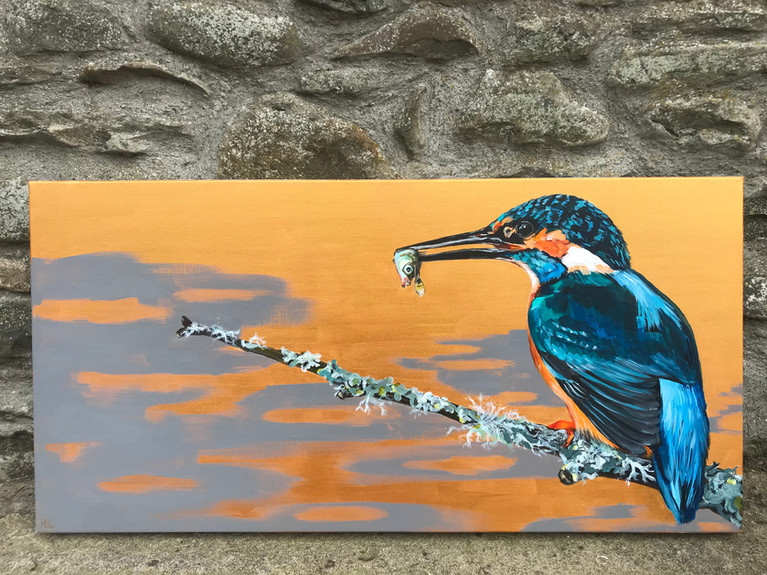 King of Kingfishers