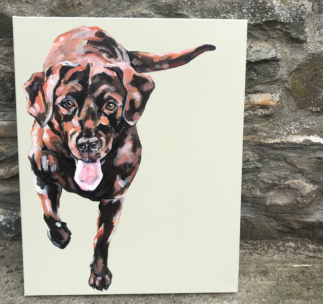 Charlie the Chocolate Labrador