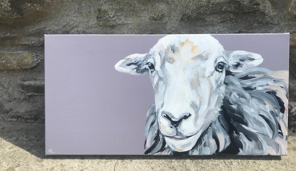 Herdwick Ewe