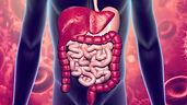 sistema digestivo.jpg