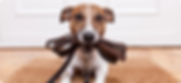 Sussex County dog fitness pet sitting