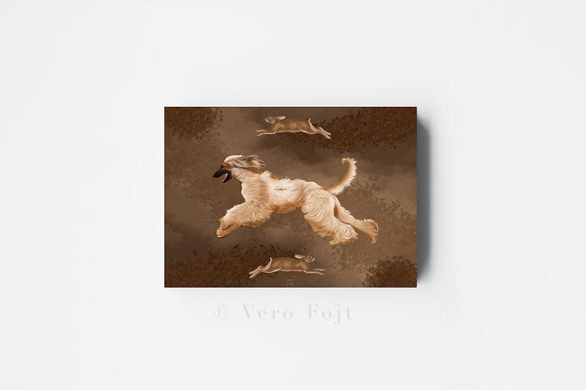 Afghan hound hunt