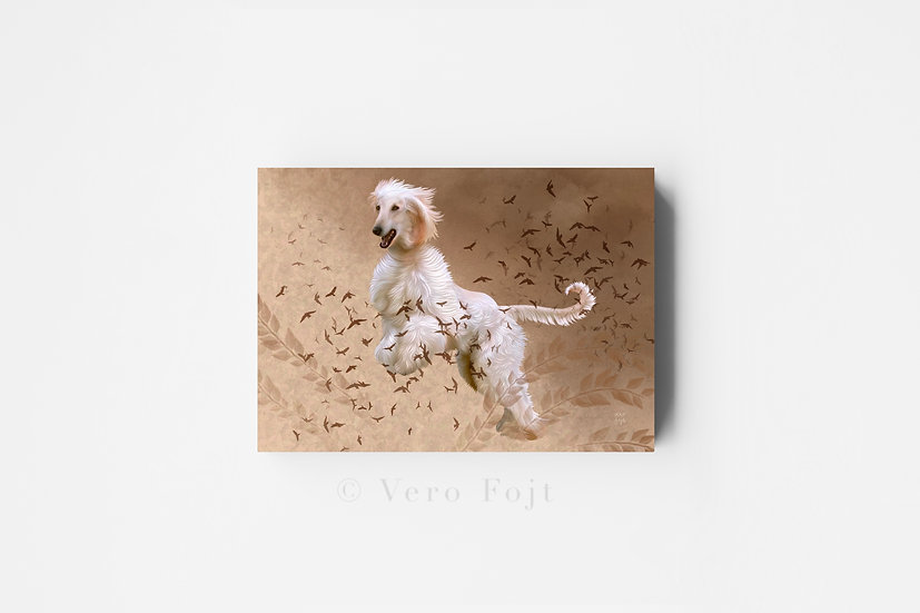 Afghan hound leap