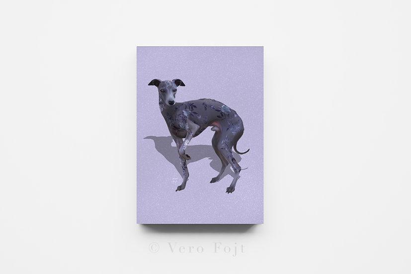 Italian greyhound floral coat