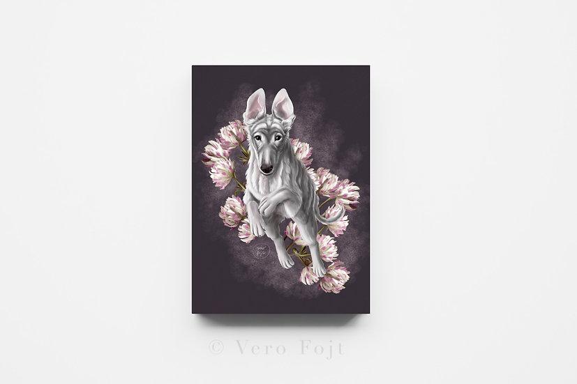 Borzoi - Puppy jump