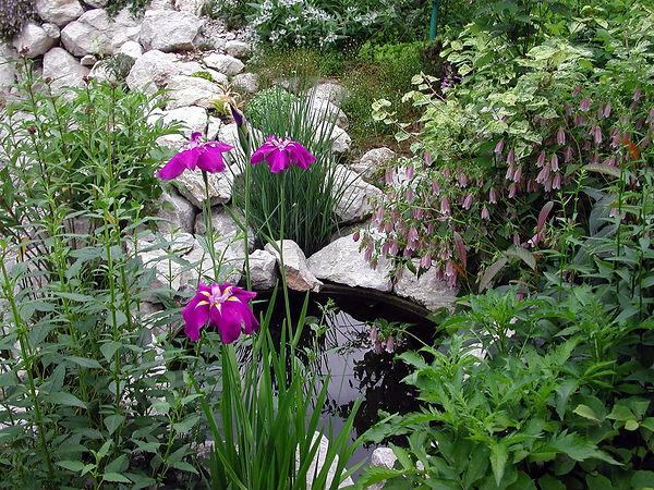 Iris ensata, Gartengestaltung