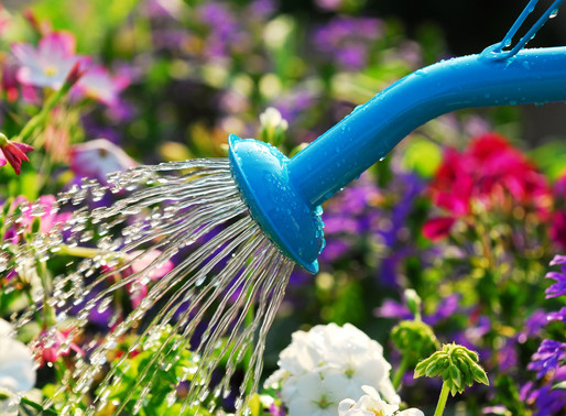 Plant Watering Instructions