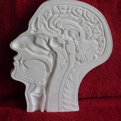 Sculpture Cast of Brain- Stone Wall Art