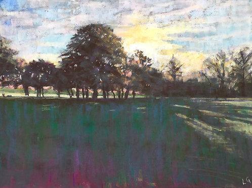 Tree line, Wandsworth Common