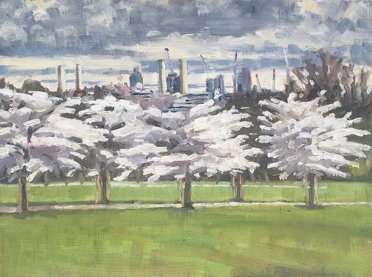 Cherry Blossom Avenue, Battersea Park
