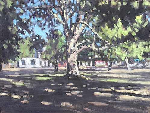 Tree shadows, Wandsworth Common