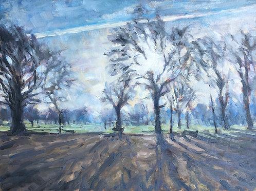 Clapham Common trees contre jour