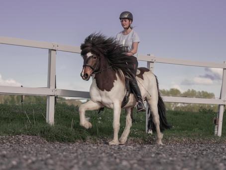 """Pferdekauf Blog 1 - Der Gedanke """"ich will ein Pferd kaufen"""""""