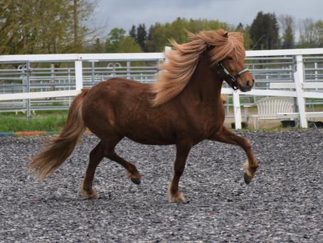"""Pferdekauf Blog 2 - Ein Pferd suchen, die Frage nach dem """"Was für ein Pferd suche ich"""" und Inserate"""