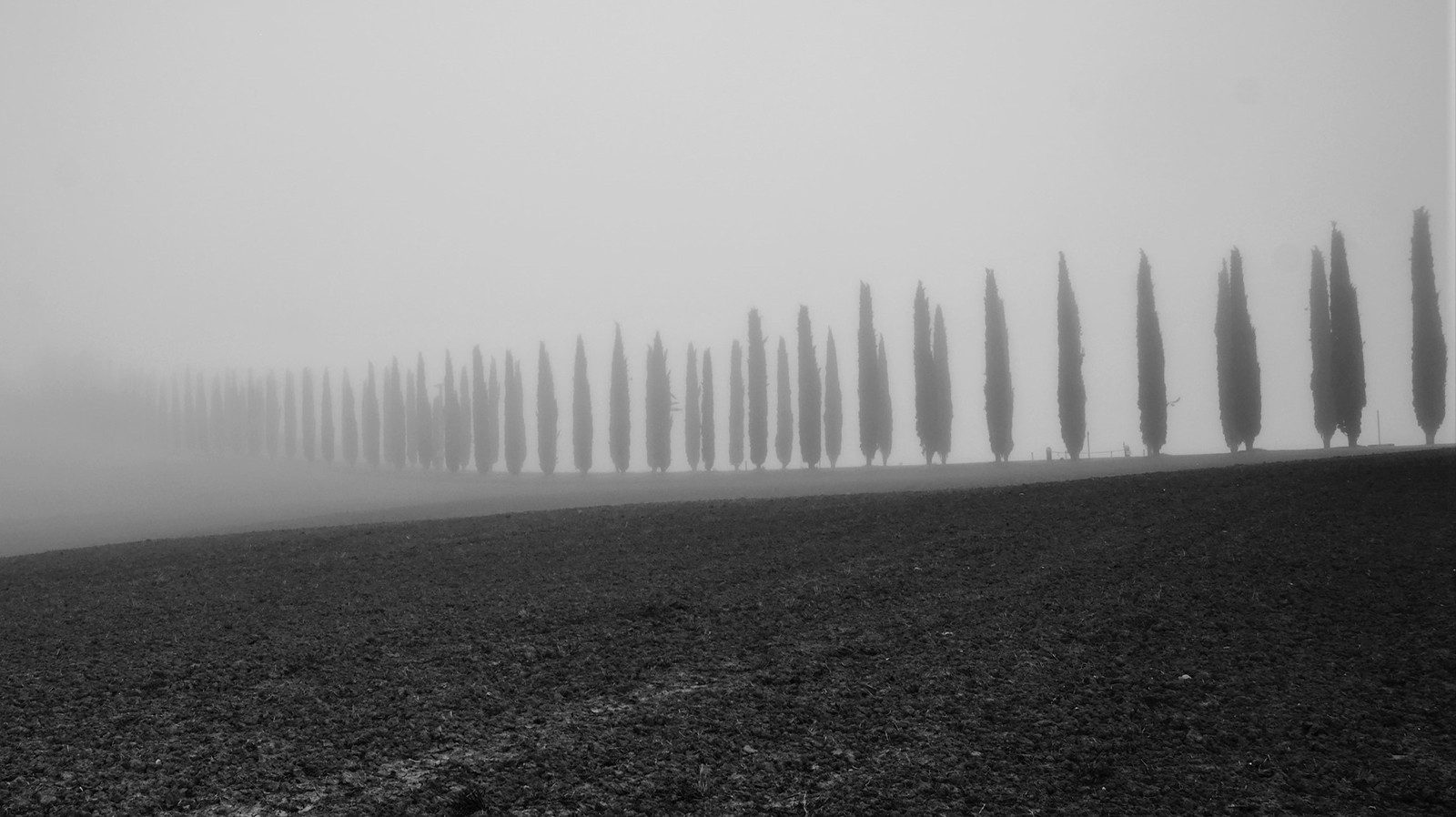 MONO - Tree Line by Margaret Goodall (9 marks)